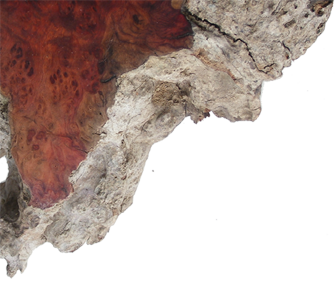Woodandform Maserknolle Amboina